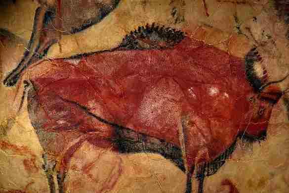 Cantabria paquete bison viaje en grupos